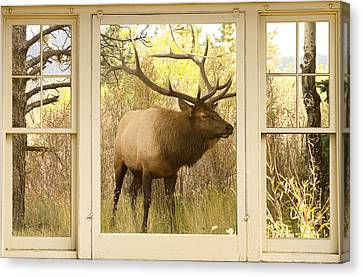 Bull Elk Window View Canvas Print by James BO  Insogna