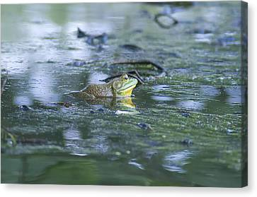 Bull Frog Pond Canvas Print by Bill Cannon