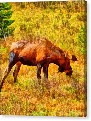 Bull Moose Painting Canvas Print by Dan Sproul