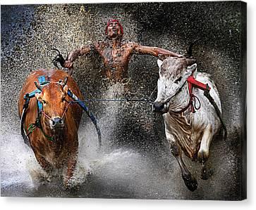 Bull Race Canvas Print by Wei Seng Chen