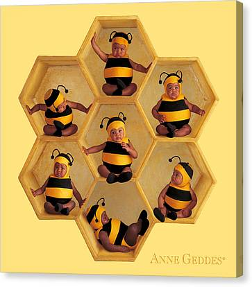 Bumblebees Canvas Print by Anne Geddes
