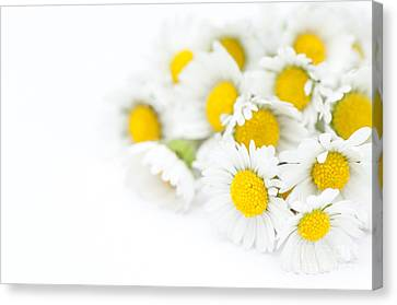 Bunch Of Daisies Canvas Print by Anne Gilbert