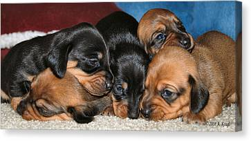 Bunch Of Puppies Canvas Print by Anthony Kougl