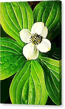 Bunchberry Blossom Canvas Print by Bill Caldwell -        ABeautifulSky Photography