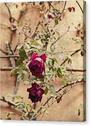 Burgundy Roses On Beige Canvas Print by Brooke T Ryan