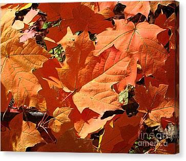 Burnt Orange Canvas Print by Ann Horn