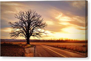 Burr Oak Silhouette Canvas Print by Cricket Hackmann