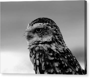 Burrowing Owl In Black And White Canvas Print by Ed  Cheremet