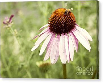 Busy Little Bee Canvas Print by Juli Scalzi