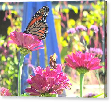 Butterflies In  The Garden Canvas Print by Melinda Stogsdill