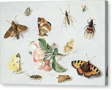 Butterflies Moths And Other Insects With A Sprig Of Apple Blossom Canvas Print by Jan Van Kessel