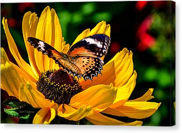Butterfly And Bloom Canvas Print by Julie Palencia