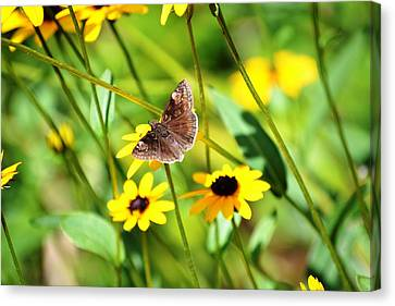 Butterfly And Yellow Flowers Canvas Print by Carlee Ojeda