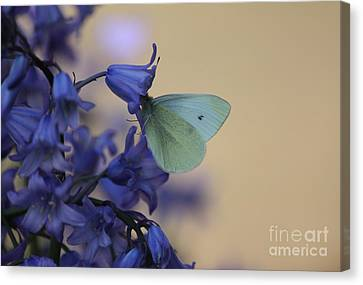 Butterfly Bounty Canvas Print by Erica Hanel