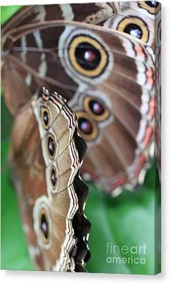 Butterfly Close Up  Canvas Print by AR Annahita