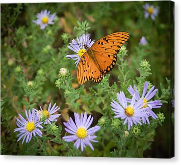 Butterfly Garden Canvas Print by James Barber