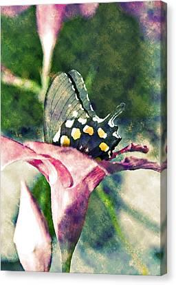 Butterfly In Flower Canvas Print by Susan Leggett