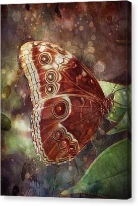 Butterfly In My Garden Canvas Print by Barbara Orenya