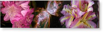 Butterfly Nebula With Iris And Pink Canvas Print by Panoramic Images