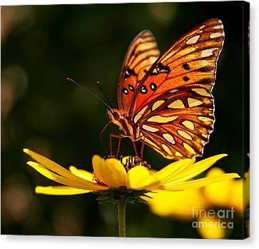 Butterfly On Flower Canvas Print by Joan McCool