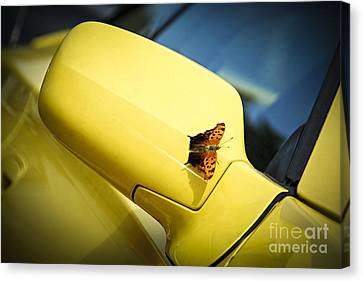 Butterfly On Sports Car Mirror Canvas Print by Elena Elisseeva