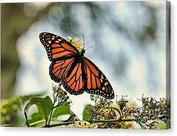 Butterfly - Open Wings Canvas Print by Paul Ward