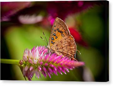 Butterfly Pink Sparkle  Canvas Print by Isabel Laurent