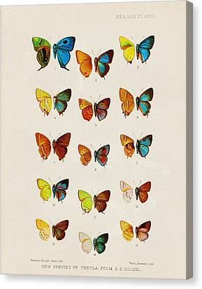 Butterfly Plate Canvas Print by Pati Photography