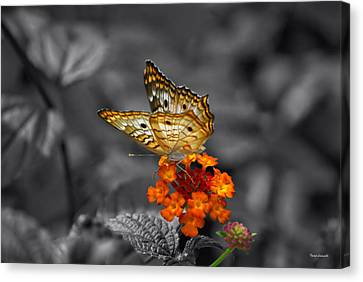 Butterfly Wings Of Sun Light Selective Coloring Black And White Digital Art Canvas Print by Thomas Woolworth