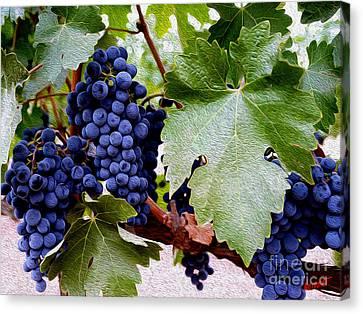 Cabernet Grapes Canvas Print by Jon Neidert