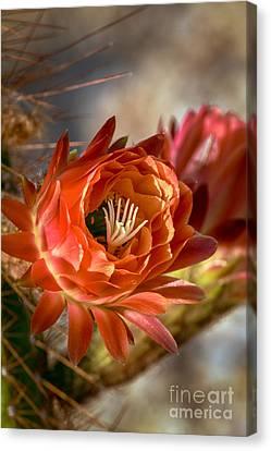 Cactus Bud Canvas Print by Robert Bales