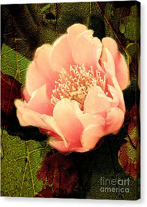 Cactus In Fantasy Bloom Canvas Print by Beverly Guilliams