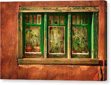 Cactus Window Canvas Print by Keith Berr