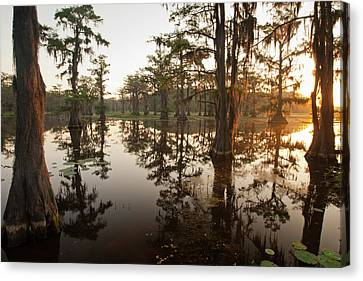 Caddo Lake, Texas At Sunrise Canvas Print by Larry Ditto