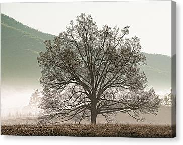 Cades Cove Tree Canvas Print by Phyllis Peterson