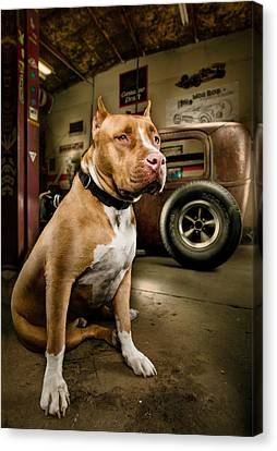 Caesar At Millers Chop Shop Canvas Print by Yo Pedro