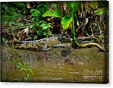 Caiman Cocodilus Canvas Print by Gary Keesler