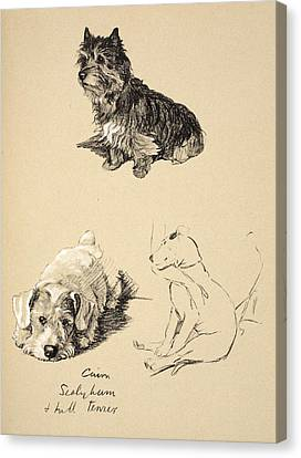 Cairn, Sealyham And Bull Terrier, 1930 Canvas Print by Cecil Charles Windsor Aldin