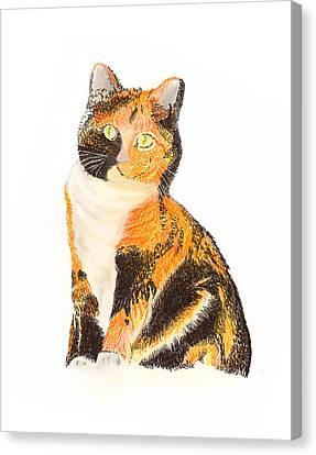 Calico Arabella Canvas Print by Jack Pumphrey