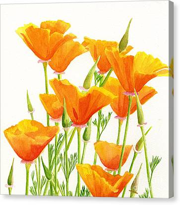 California Poppies Square Design Canvas Print by Sharon Freeman