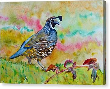 California Quail Canvas Print by Beverley Harper Tinsley