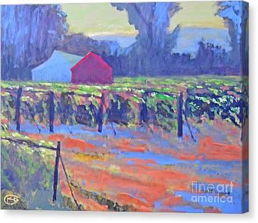 California Vineyard Canvas Print by Kip Decker