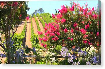 California Vineyard Wine Country 5d24495 Long Canvas Print by Wingsdomain Art and Photography