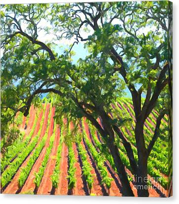 California Vineyard Wine Country 5d24519 Square Canvas Print by Wingsdomain Art and Photography