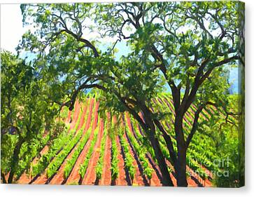 California Vineyard Wine Country 5d24519 Canvas Print by Wingsdomain Art and Photography