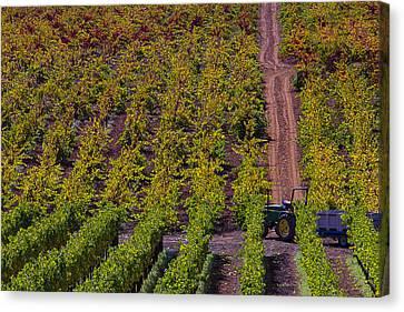 California Vineyards Canvas Print by Garry Gay