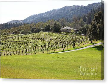 California Vineyards In Late Winter Just Before The Bloom 5d22073 Canvas Print by Wingsdomain Art and Photography