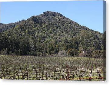 California Vineyards In Late Winter Just Before The Bloom 5d22142 Canvas Print by Wingsdomain Art and Photography
