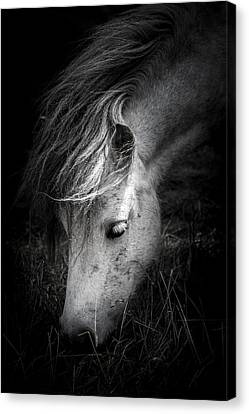 Call Me The Wind Canvas Print by Shane Holsclaw