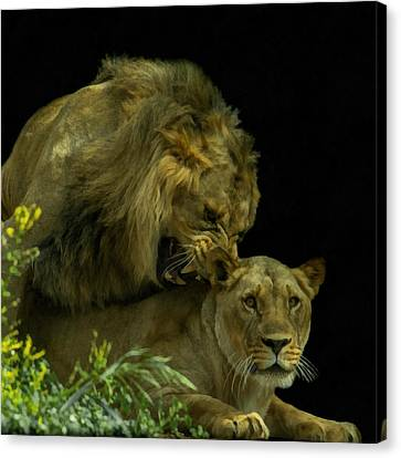 Call Of The Wild 2 Canvas Print by Ernie Echols